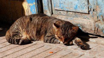 Com que idade gato é considerado velho
