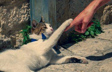 Por que gatos preferem uma pessoa?