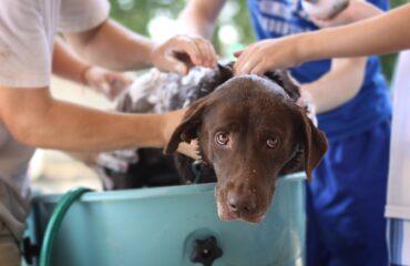 Quanto tempo depois do parto cadela pode tomar banho?