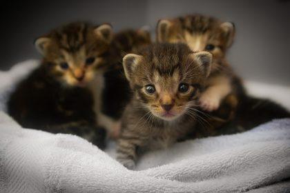 Quando dar banho em filhote de gato