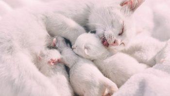 Sinais do início de parto em gatas