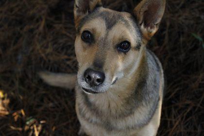 Cachorro lambendo o testículo pode ser o quê?