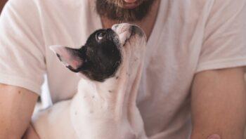 cachorro pega coronavírus